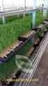 Advance Semi Automated Hydroponic Fodder Shadenet Machine