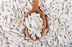 Hulled White Sunflower Seeds, For Agriculture, Packaging Size: 12.5 Kg