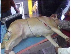 Critical Care Unit Treatment Service For Dogs