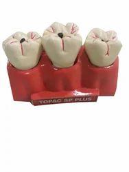 Human Teeth Dental Set