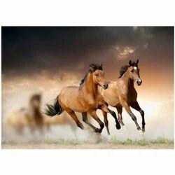 Pvc Printed 3d Horse Wallpaper Rs 120 Square Feet S S Interiors