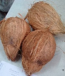 Rabitha A Grade Semi Husked Coconut, Packaging Size: 12.5kg, Coconut Size Available: Medium