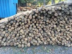 Brown Eucalyptus Wood Poles (Nilgiri Wood )