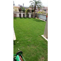 Terrace Gardening Services