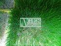 Wheat Grass Hydroponic Machine