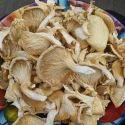 Dry Oyster Mushroom (Sajor Kaju/Florida)