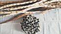 Moringa Tree Plantation Seeds: Momax3 Variety