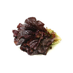 Red Romaine Lettuce, Packaging: Plastic Bag Or Polythen