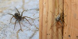 Spray Chemical Based Spider Prob Pest Control Service