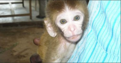Monkey Treatment