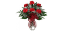 Red Carnations Flowers