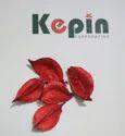 Potpourri Red Wood Cotton Bulb