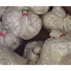 Oyster Mushroom Spawn, Packaging Type: Carton, Packaging Size: 20 Kg