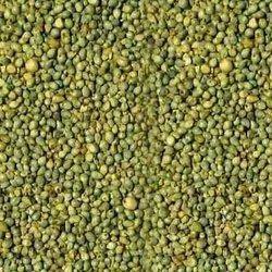 Protinex Feed Indian Green Millet, Organic