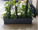 Garden Tray (18'' & 24'' & 41'')