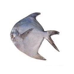 Silver Pomfret Fish 6pc / kg