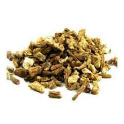 Dong Quai (Angelica Sinensis) Extract