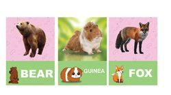 Learn Wild And Farm Animals Flash Cards