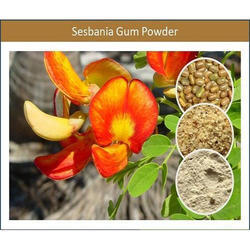 Highly Water Soluble Sesbania Gum Powder