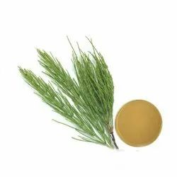 Herbo Nutra Horsetail Extract, Packaging Size: 25 Kg