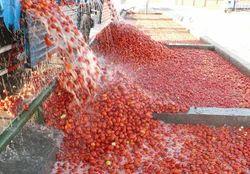 Semi Automatic Tomato Processing Plant