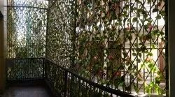 8 Fts Bamboo Hedges, For Direct, Size/Dimension: 20 Sqfts
