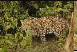 Wildlife Photography Services