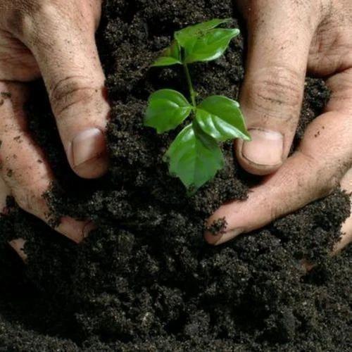Organic Bio Fertilizer at Rs 25/kilogram | Bio Fertilizers | ID: 18963310448