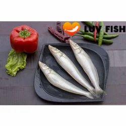 Lady Fish Sea Fish