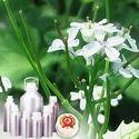 Garlic Oleoresin