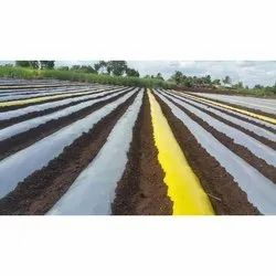 Yellow Mulch Film