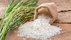 Non Basmati Rice Bulk Shipment Inquiries Only( SONA MASURI BOILED RICE)