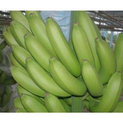G9 Fresh Banana