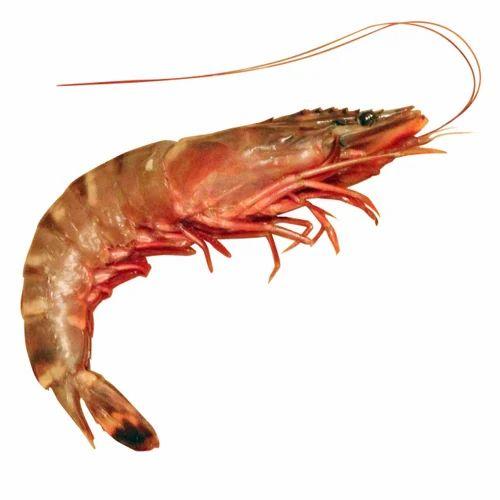 Raw Pond Shrimp At Rs 400 Kilogram Shrimp Id 13983239048