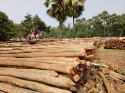 Brown Eucalyptus Pole, Thickness: 3 Inch To 10 Inch