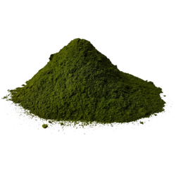Dehydrated Palak Powder
