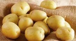Gujarat Yellow Deesa Pukharaj Potato, Packaging Size: 25kg, 50kg