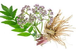 Valerian Root Therapy Oil