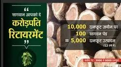 Agriculture Land With Teak Wood Plant On Nagpur, Size/ Area: 5000
