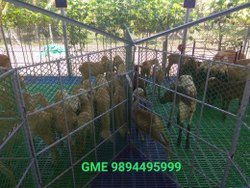 Plastic Slatted Flooring Are Modern Method Used In Goat Farms