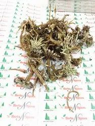 Akarkara Roots Powder - Anacyclus Pyrethrum Roots Powder