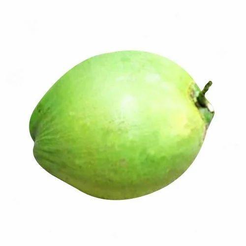 Fresh Green Coconut | Breeze Exporters & Importers | Exporter in