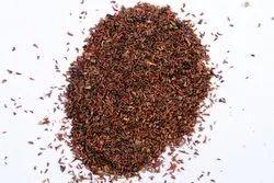 Eucalyptus / Nilgiri / Safeda Tree Seeds