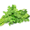 Fresh Coriander Leaves Seeds