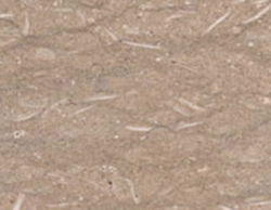 Fossil Grey Marble Slab for Flooring, Thickness: 10-50 mm
