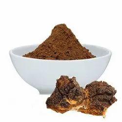 Changa Mushroom Extract