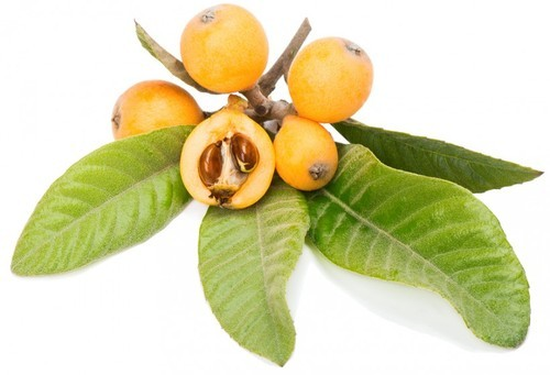 Pictures Of A Loquat