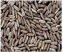 Gulmohar Seed