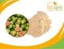 Spray Dried Guava Powder