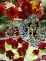 Gopal Ji Poshak
